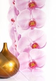 Fotobehang Wallpaper Queen ML203 orchidee