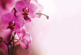 Fotobehang Pink Orchids Flowers