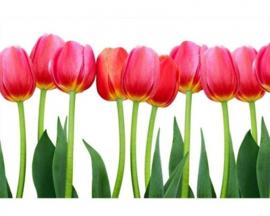 Fotobehang Tulpen