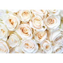 Fotobehang Rozen Cream