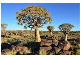 Fotobehang Namibië