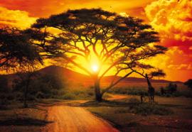 Fotobehang Afrikaanse Natuur & Boom