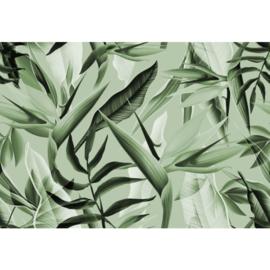 Fotobehang Tropicalia Groen
