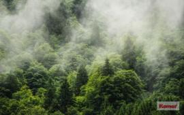 Komar Forest Land PSH061-VD4