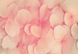 Fotobehang Roze bloemen