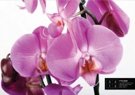 Fotobehang AG Design FTS0049 Orchidee