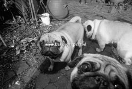 Fotobehang AP Digital 470071 Puppy Dogs