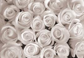 Fotobehang Sepia Roses