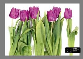 Fotobehang AG Design FTS0065 Tulpen