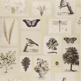 John Derian for Designers Guild PJD6001/03 Flora and Fauna
