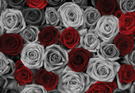 Fotobehang Red Roses Black And White