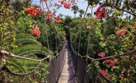Fotobehang Hangbrug in het Bos