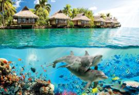 Fotobehang Tropische lagune met dolfijnen