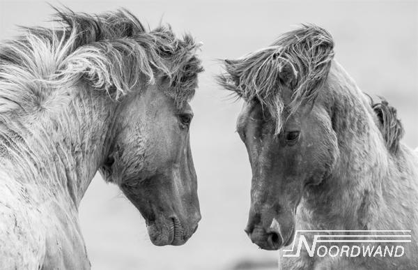 Fotobehang Noordwand Farm life 3750020 Grey horses