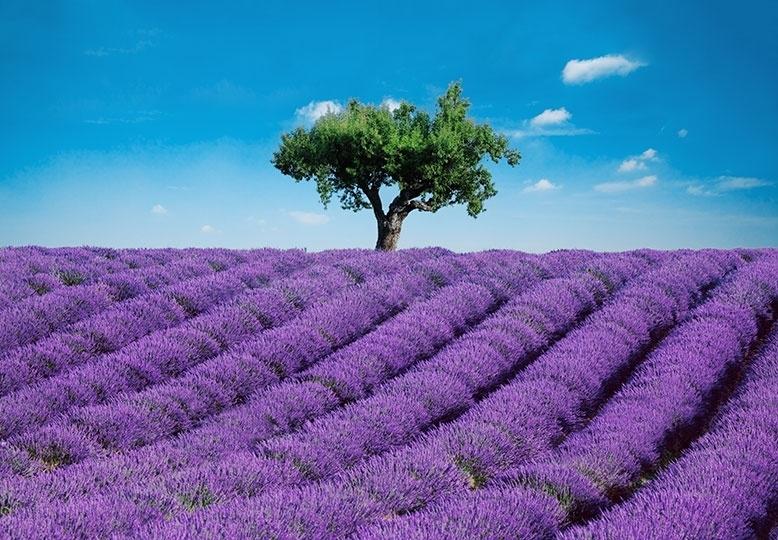 Fotobehang Idealdecor 00144 Provence
