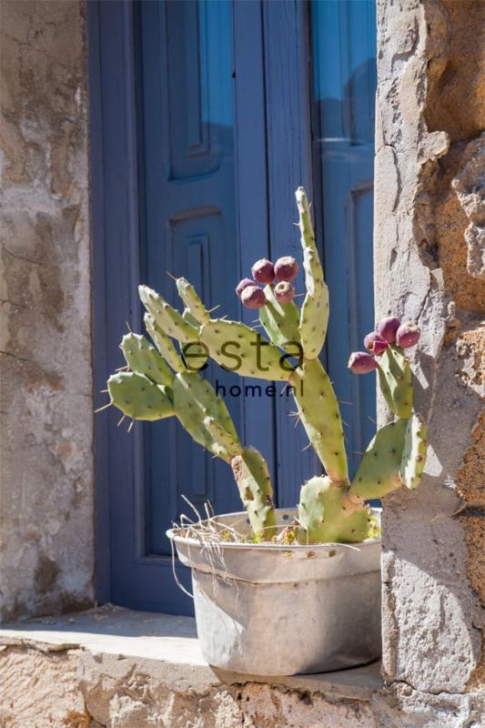 Esta Cabana 158610 photowallXL  cactus