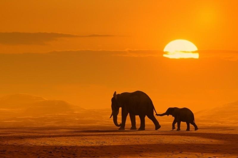 Dutch DigiWalls fotobehang art. 70001 Olifant bij zonsondergang
