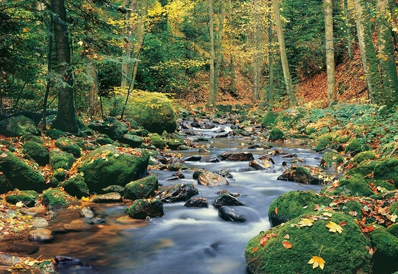 Fotobehang Idealdecor 00278 Forest Stream