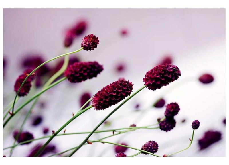 Fotobehang Violet bloemen