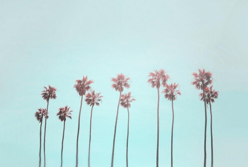 Fotowand Tropical trees by Andrea Haase afm. 400cm x 270cm hoog