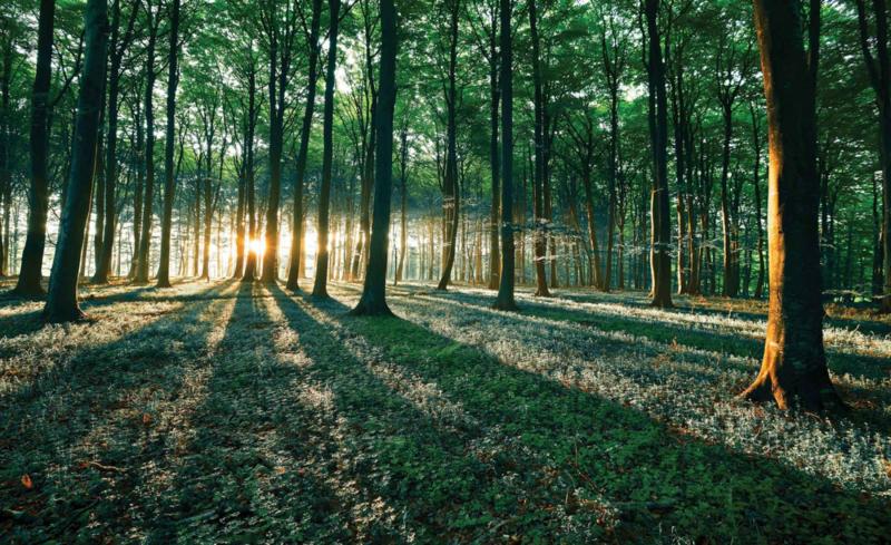 Fotobehang Morgenzon in het Bos
