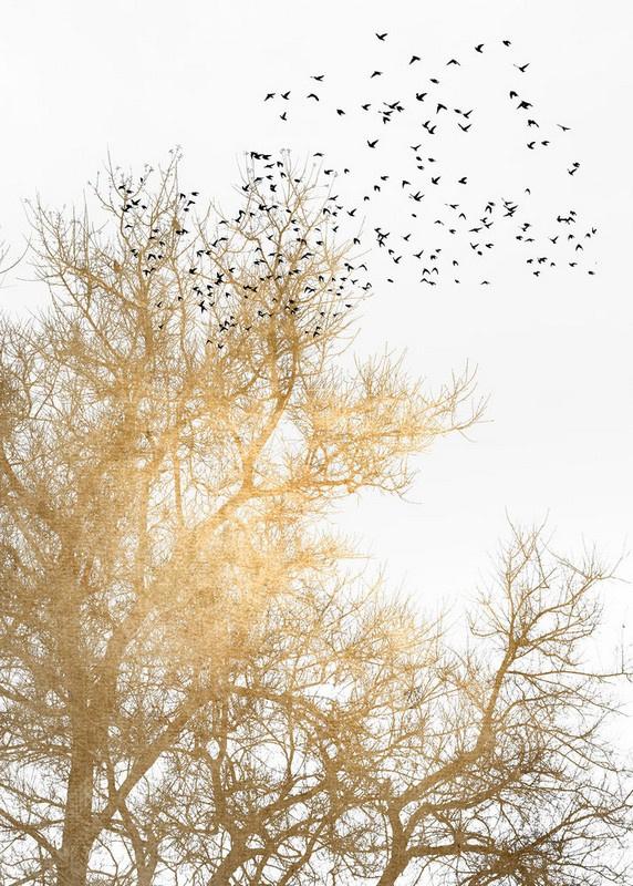 Fotowand Golden skies by Kubistika afm. 200cm x 280cm hoog