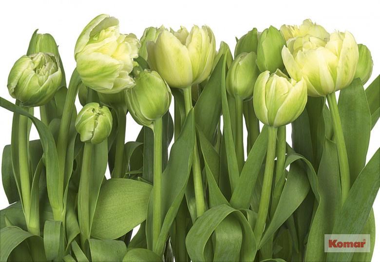 Komar 8-900 Tulips