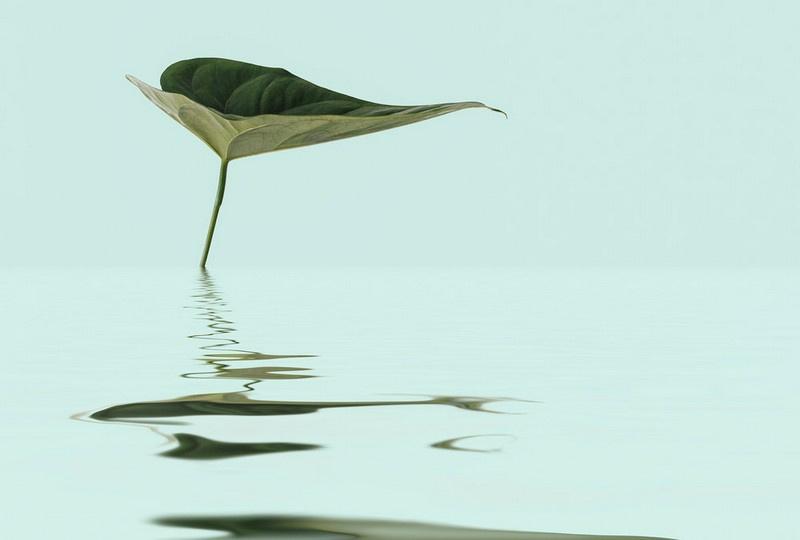 Fotowand Zen water leaf by Andrea Haase afm. 400cm x 270cm hoog