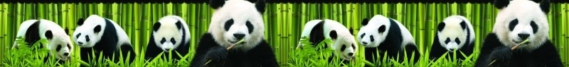 Dutch XXL behangrand Panda 80012