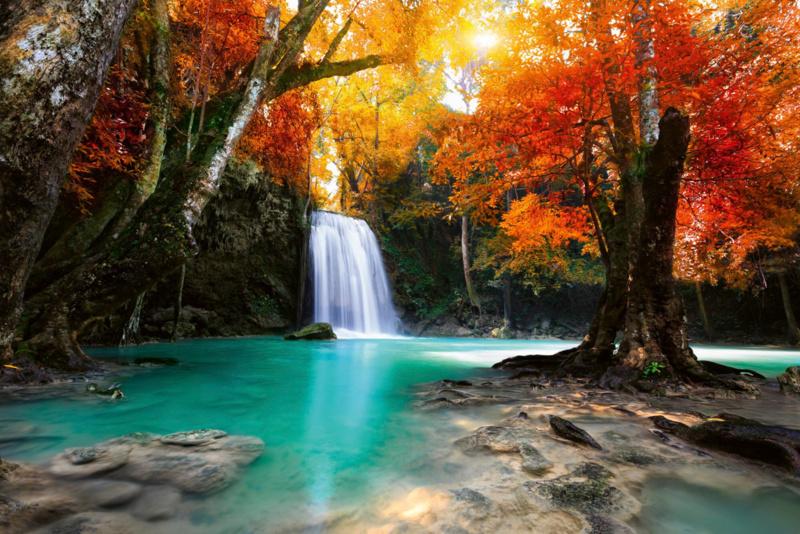 Fotobehang Waterval in het bos