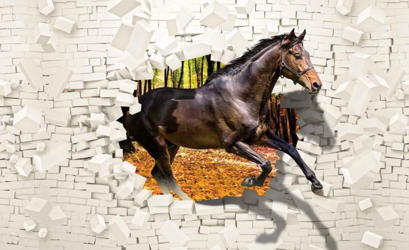 Paarden Behang Posterbehang.Fotobehang Paard Door Muur Wallart By Behangexpert
