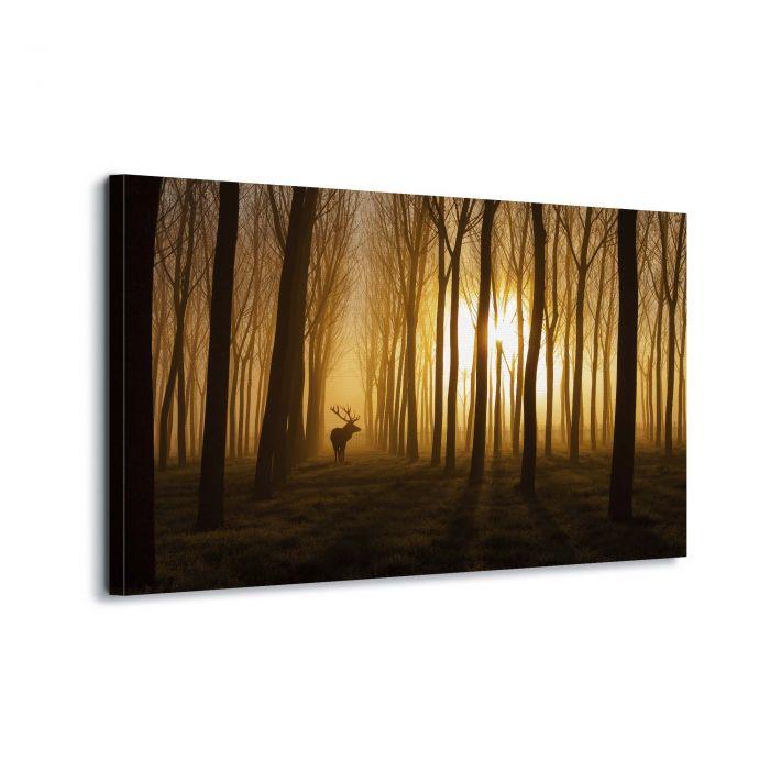 Canvasdoek Morgenzon in het bos