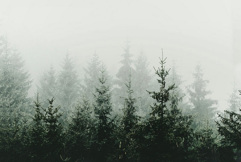 Fotowand Mountain forest by Monica Strigel afm. 400cm x 270cm hoog