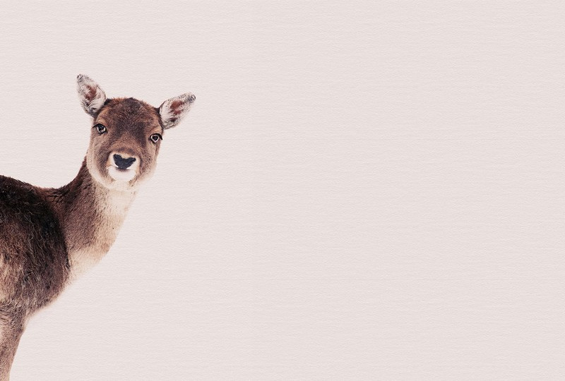 Fotowand Deer rose by Monica Strigel afm. 400cm x 270cm hoog