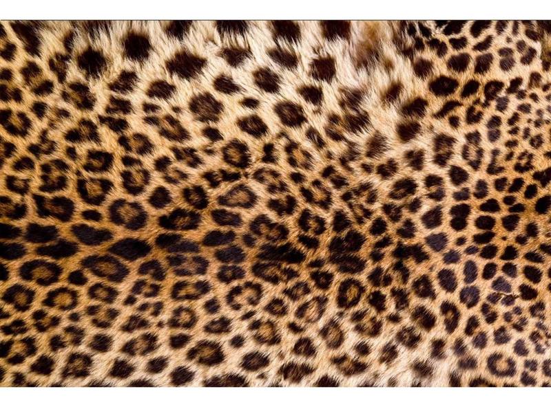 Fotobehang Luipaard huid