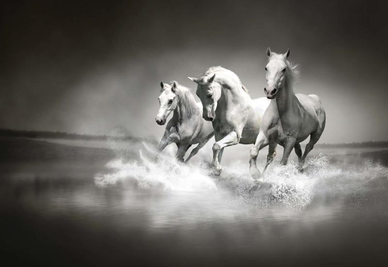 Paarden Behang Posterbehang.Paarden Behang