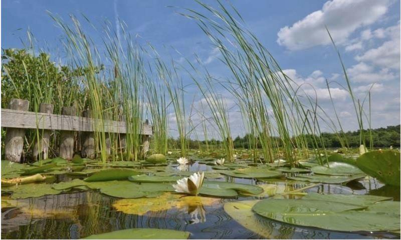Fotobehang Holland 4420 - Loosdrecht