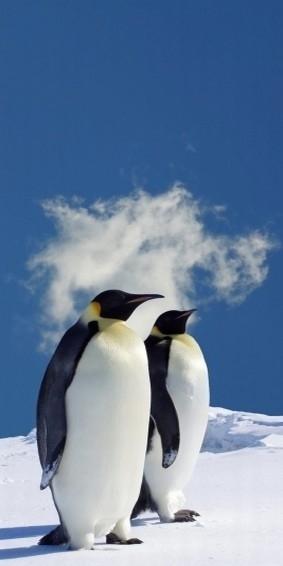 Dutch DigiWalls fotobehang art. 70026 Penguins