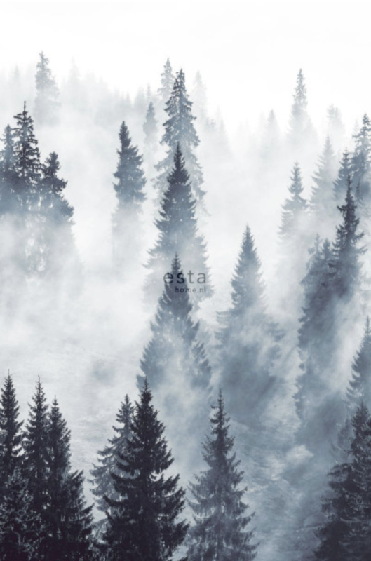 Esta photowallXL 158909 foggy Forest