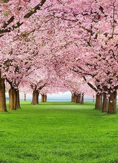 Fotobehang Idealdecor 00385 Cherry Trees