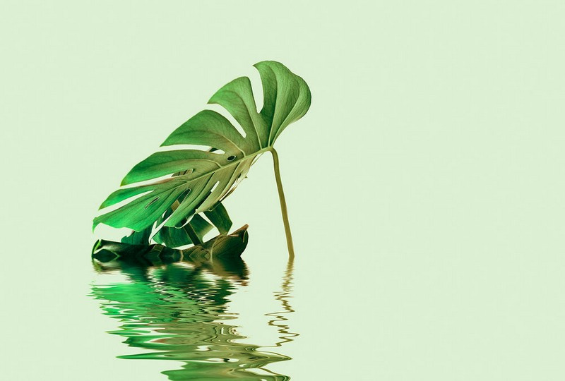 Fotowand Monstera leaf water 2 by Andrea Haase afm. 400cm x 270cm hoog