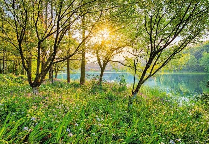 Komar National Geographic fotobehang Spring Lake 8-524