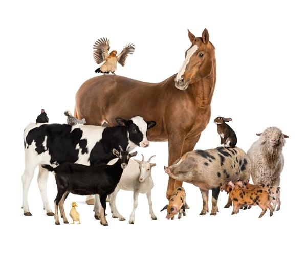 Fotobehang Noordwand Farm life 3750059 farm animals