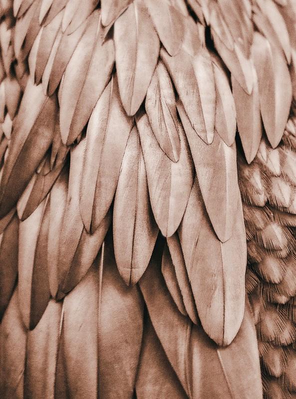 Fotowand Feathers 1 by Monika Strigel afm. 200cm x 270cm hoog