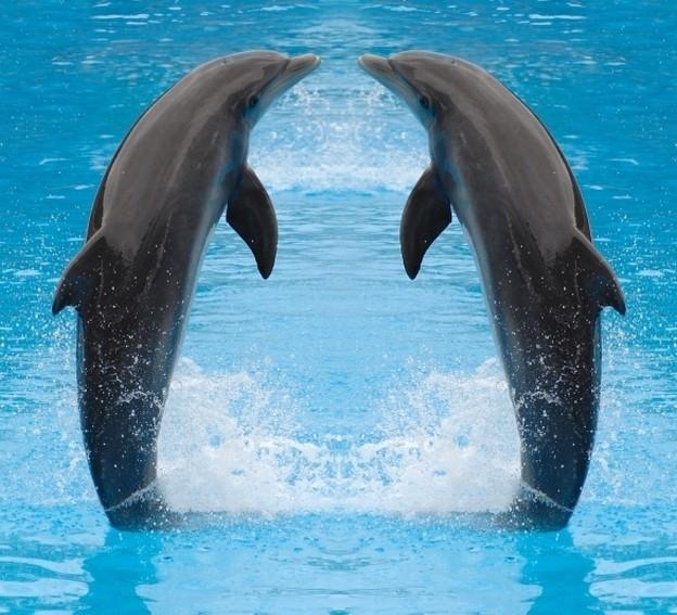 Dutch DigiWalls fotobehang art. 70018 Dolfijnen