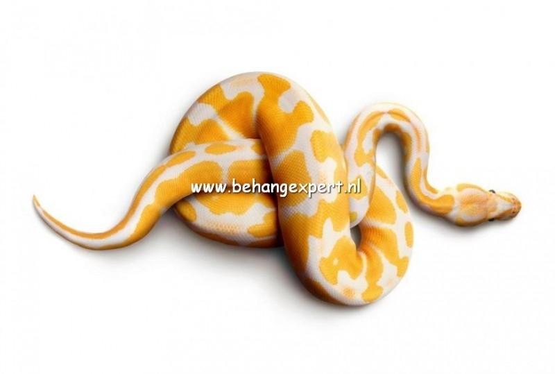 Fotobehang AP Digital 470031 Snake