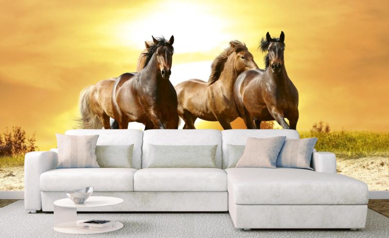 Fotobehang Paarden in zonsondergang