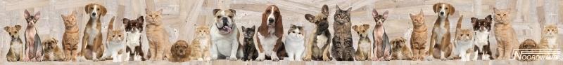 Behangrand Noordwand Farm life 3750028 Cat / dog