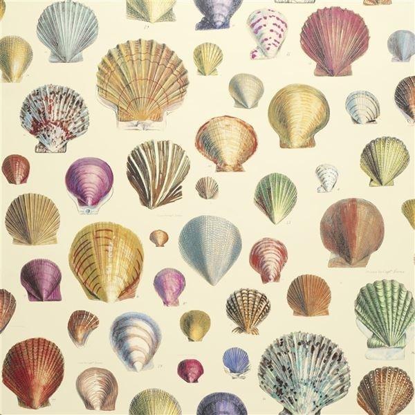 John Derian for Designers Guild PJD6000/01 Captain Thomas Brown's Shells