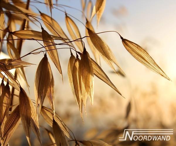 Fotobehang Noordwand Farm life 3750013 Good morning